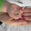 Hands Daisy